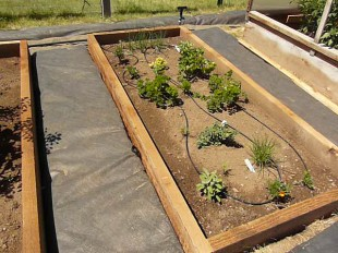 vegetable garden drip irrigation installation