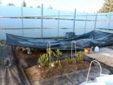 Hardi Zone Gardening
